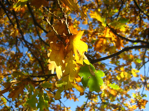 Autumn leaves in Epping Forest