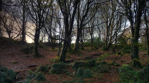 wood autumn ireland panorama irish tree verde green foglie landscape leaf view foglia leafs albero autunno hdr irlandese irlanda barna barnawoods panasoniclumixfz38