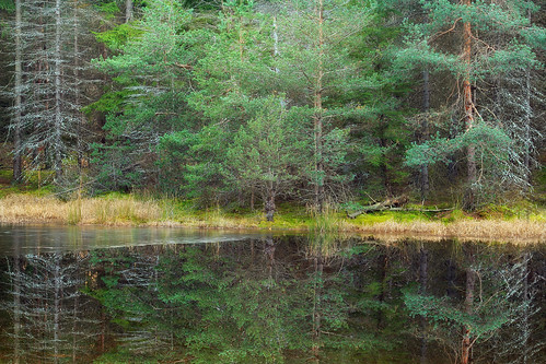 autumn trees forest reflections pond hiking pennsylvania creativecommons coniferous endlessmountains loyalsockstateforest sullivanmountain lycomingcounty mcintyrewildarea