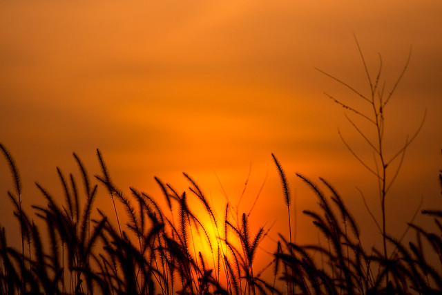Sunrise, Grass, Sunset, Pops Digital