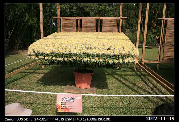 20121119_Flower9