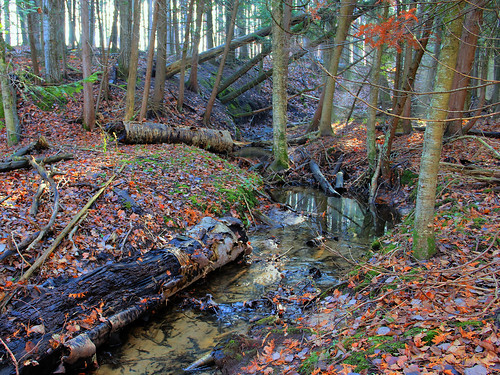 michigan indianriver alanson cedarswamps birchtrees birches creeks wetlands swamps autumn fall cedars cedartrees landscape cedarswamps11241 cedarswamp11241 hdr11241 swamps11241 landscapes11241 landscape11241 robertcarterphotographycom ©robertcarter