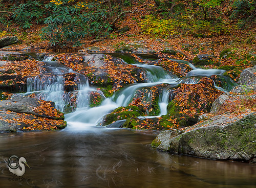 tn tennessee greatsmokymountains laurelcreekroad canon7d roadsideriver endlessreach1 carlsshaw carlshawphotography