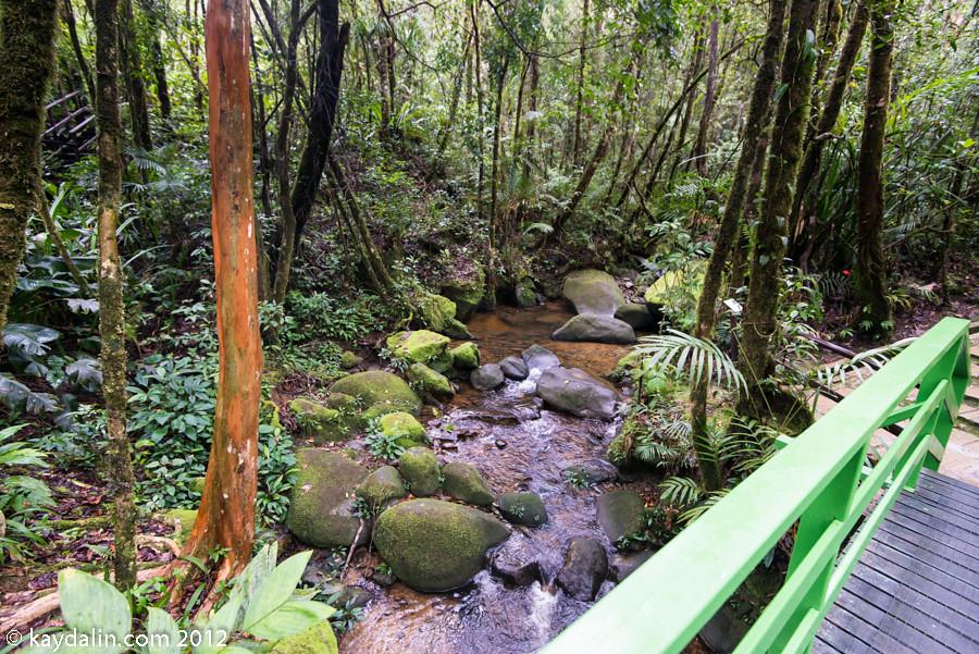 малайзия борнео лес