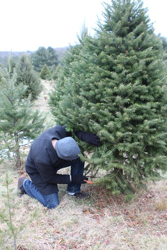 Nate Struggling with Christmas Tree