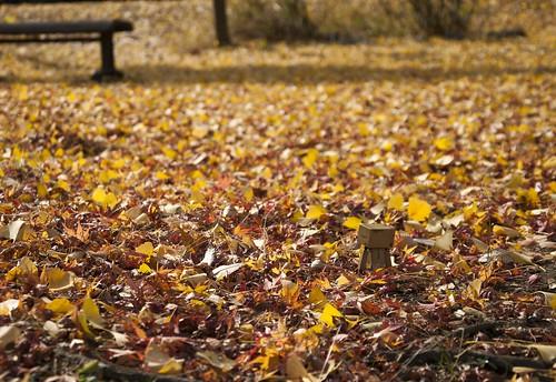 落ち葉とダンボー