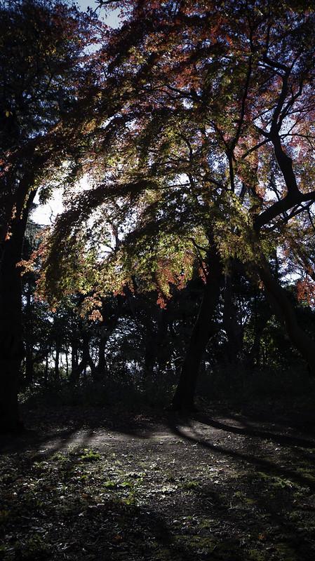 Autumn Momiji Lanterns