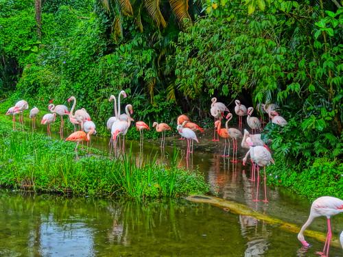 フラミンゴ:The Pink Flamingos
