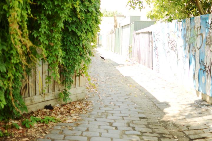cat laneway