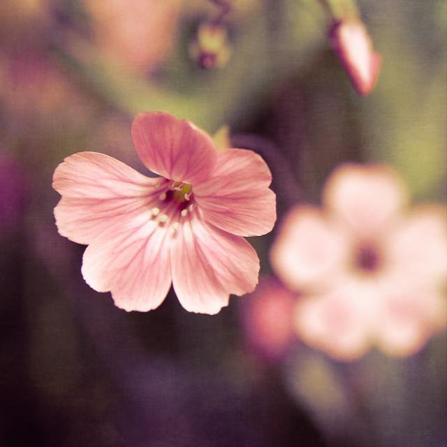 Blumenquadrat