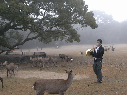 鹿寄せ@奈良公園(飛火野)-05