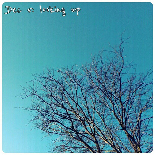 Dec 5: looking up #winter #sky #fmsphotoaday