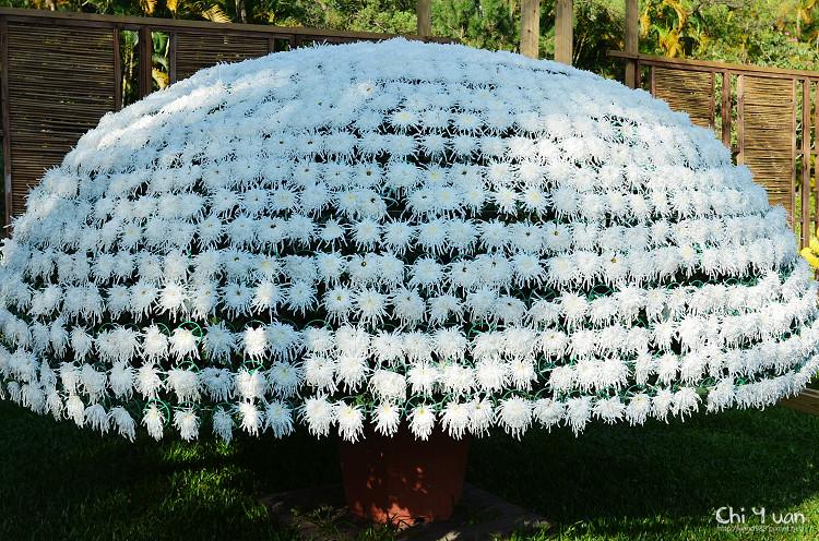 2012士林官邸菊展22.jpg