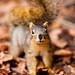 My Friend Critter by Thomas Hawk