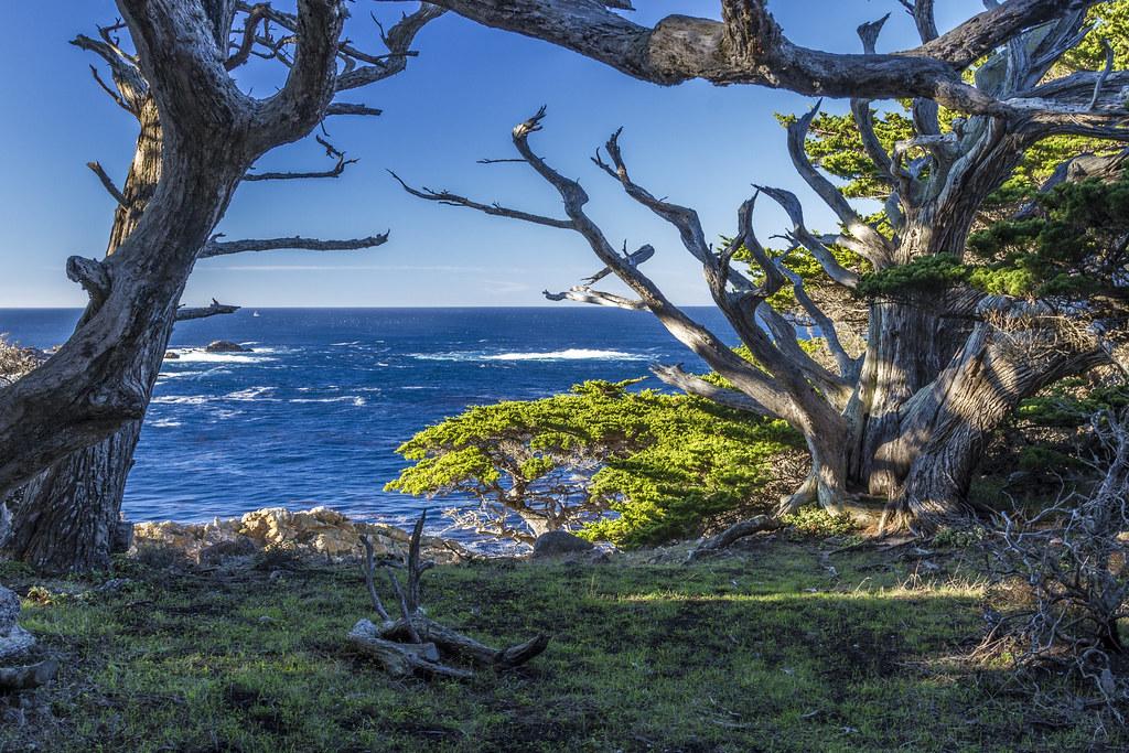 Point Lobos, Headland Cove