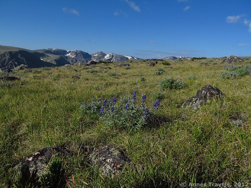 Walking along the tundra, Hellroaring Plateau, Custer National Forest, Montana