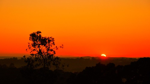 morning red orange sun black tree nature colors beautiful silhouette composition sunrise spectacular landscape golden amazing mood colours artistic horizon sydney australia layers redsky colourful framing position lonetree goldencolours goldensunrise goldentones colourtones nikond90 layersofcolours simplyressunrise