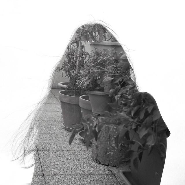 Passion intérieure : un petit jardin