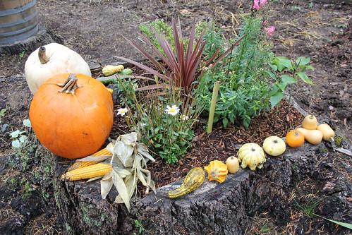 CA and fall OctNov2012 329