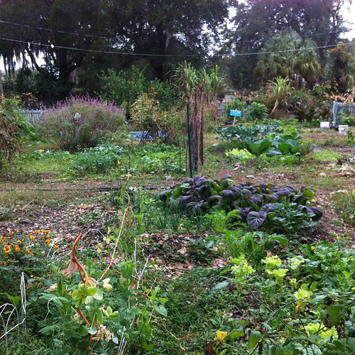 Thriving community garden