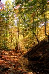 Big Tree Preserve, Atlanta