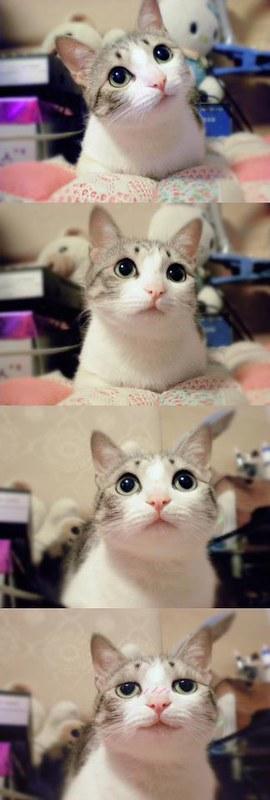 阿芝• •貓~ meow~ ) • •