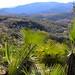 Palms - Palmas cerca de Guadalupe Hidalgo, Región Mixteca, Oaxaca, Mexico por Lon&Queta