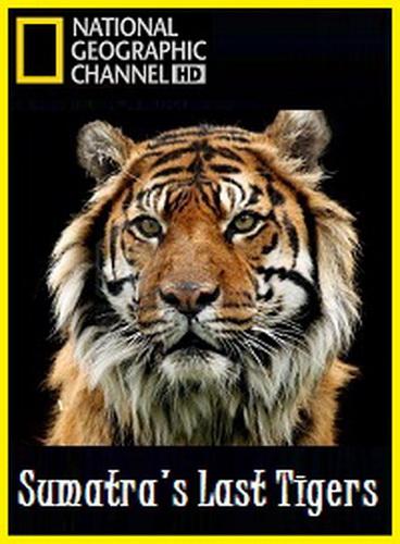 Sumatra's Last Tigers by Megan Lorenz