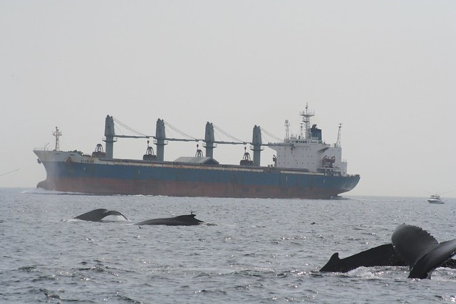 Shipping and whales on Stellwagen Bank