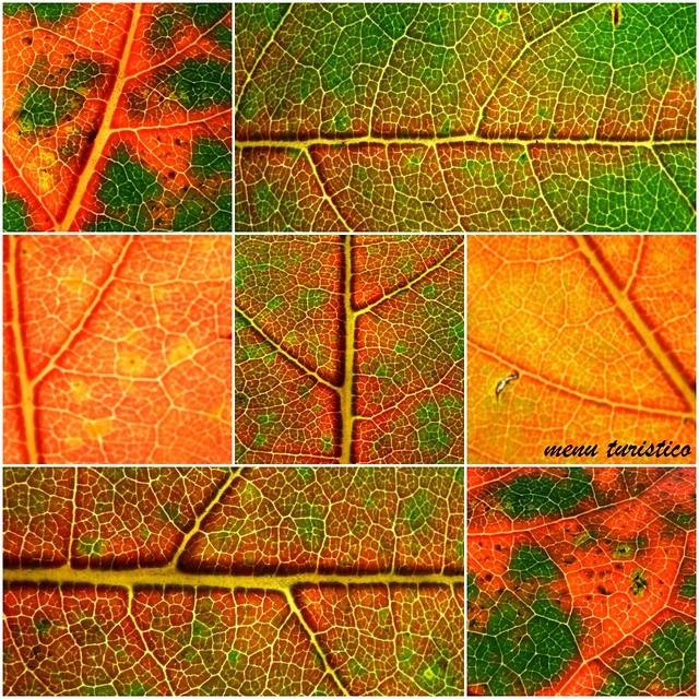 foglie collage 2