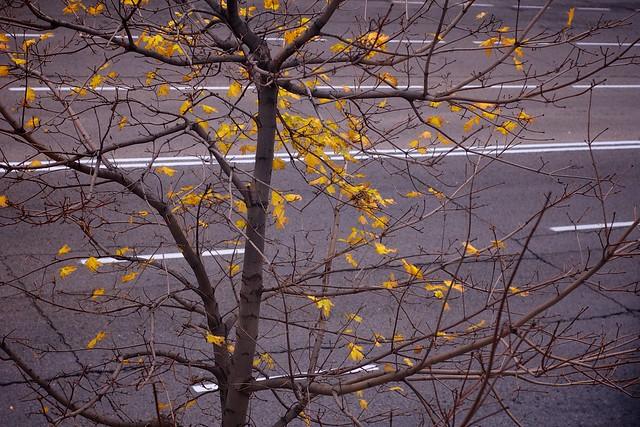 325/366: Leaves