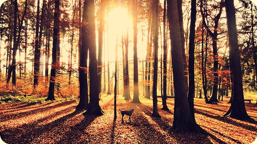 autumn dog cute nature forest sunrise switzerland walkingmydog