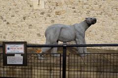 """Henry III""""s Polar Bear"""