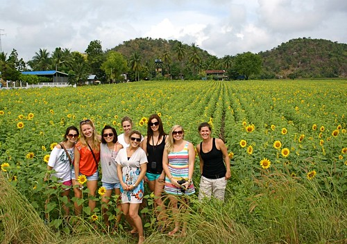 sunflower field group