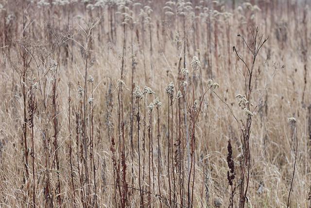 hejregina.blogspot.com hösten1