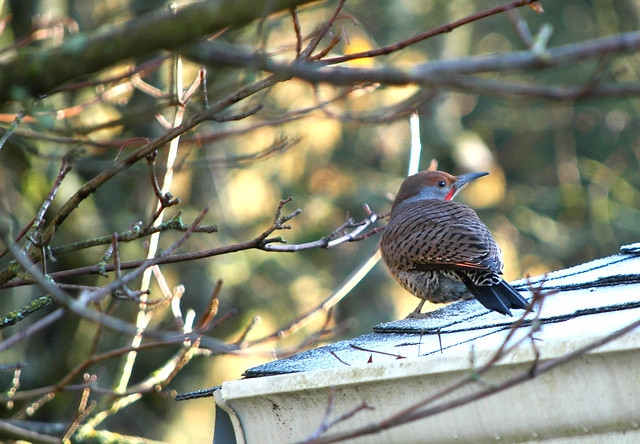 flicker on the roof