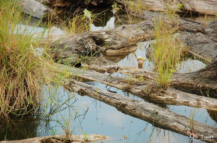 羅東林業文化園區-貯木池19.jpg