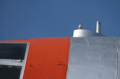 C-46輸送機とスズメ