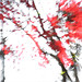 Japanese Maple - Abstract - DD0A1434-1000-bz