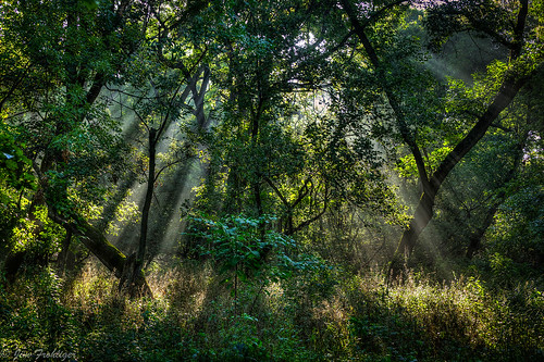 chicago nature forest canon eos mark ottawa ii 5d preserve