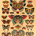 Butterfly Color by Kyler Martz
