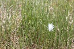wetland(0.0), flower(0.0), chrysopogon zizanioides(0.0), lawn(0.0), prairie(1.0), agriculture(1.0), field(1.0), grass(1.0), plant(1.0), flora(1.0), natural environment(1.0), phragmites(1.0), meadow(1.0), grassland(1.0),