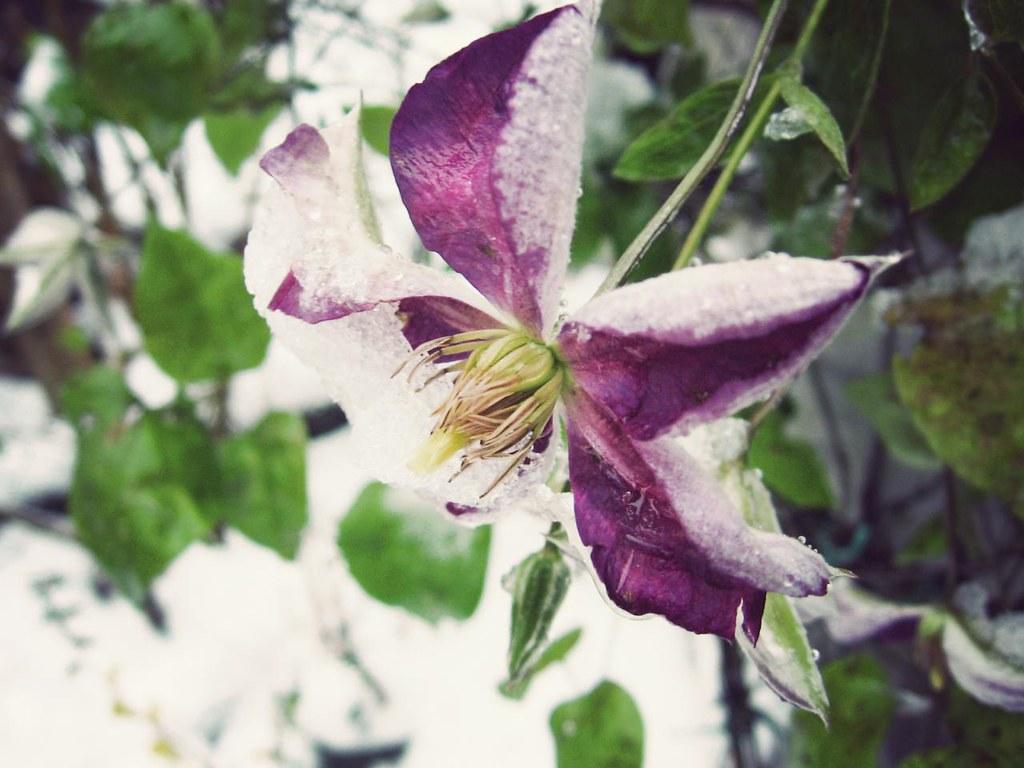 Snow Flora