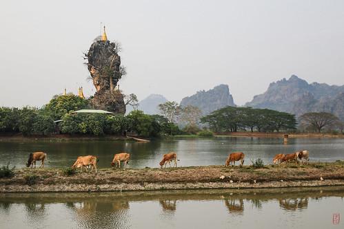 voyage trip temple burma stupa myanmar vache pagode worldtour birmanie tourdumonde kayinstate myanmarbirmanie
