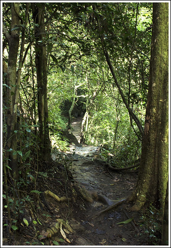 Jungle path at Bang Pae