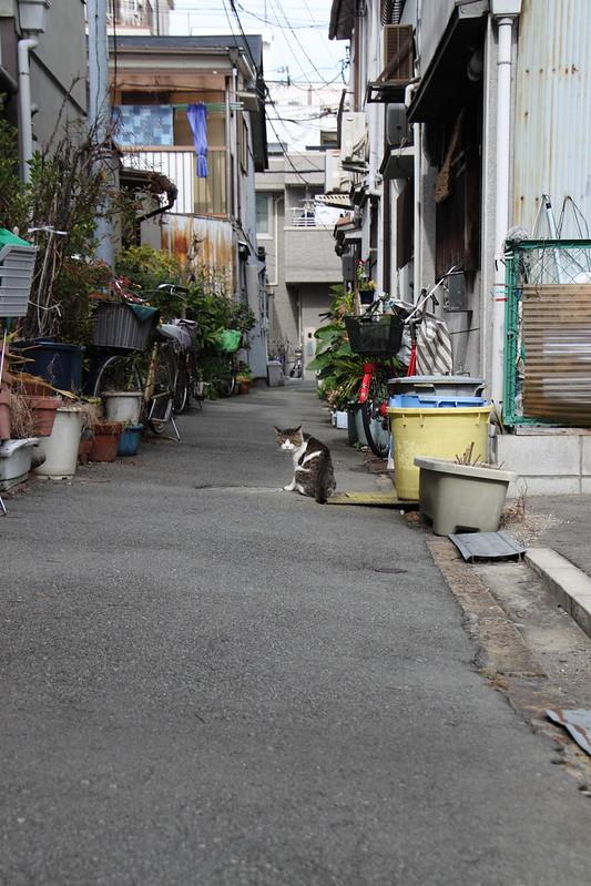 路地猫 1