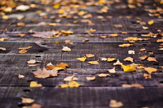 Pont de feuilles
