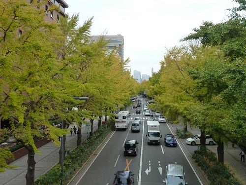 2012/11/11時点の横浜のイチョウ