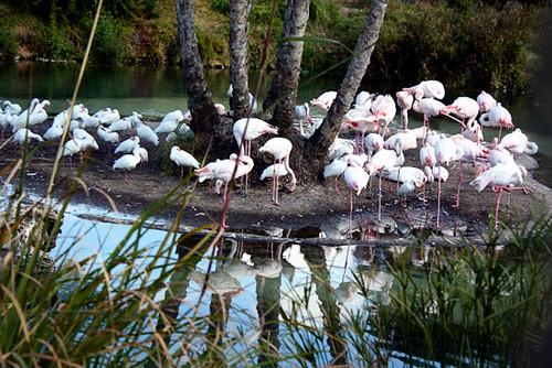 AK_SafariRide_Flamingos