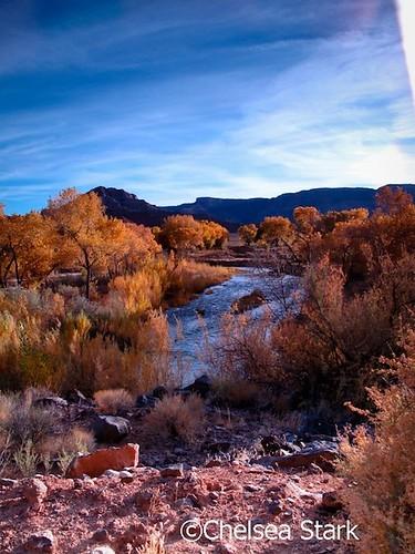 """Zion"""" """" National Park-ChelseaStark http://www.chelseastarkphotography.com by chelseastarkphotography.com"""